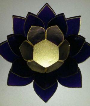 lotus indigo
